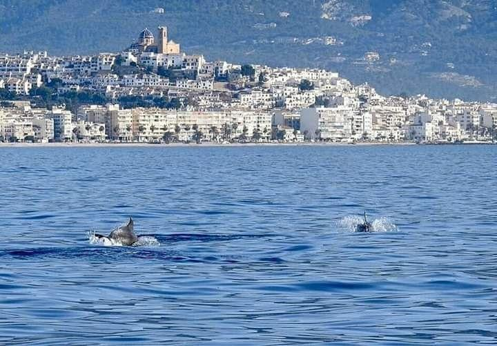 Dolphins on the Costa Blanca, Altea