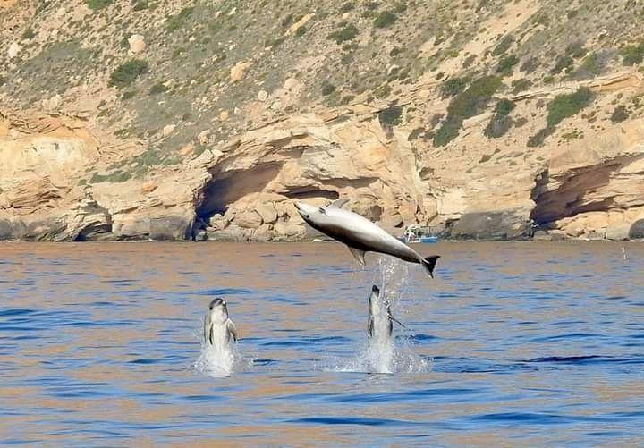 Dolphins on the Costa Blanca
