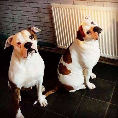 Did someone say walk?
